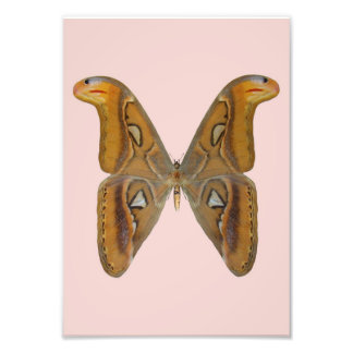 Atlas Moth Art Photo