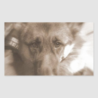 Atlas the Wonderdog