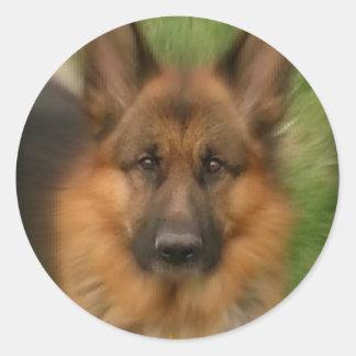 Atlas the Wonderdog Round Sticker