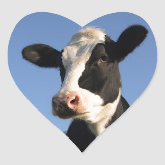 Attentive cow heart sticker