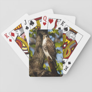 Attentive Hawk Playing Cards