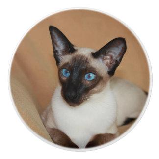 Attentive Siamese Cat Ceramic Knob