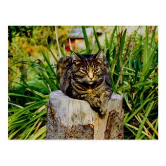 Attitude Cat Postcard