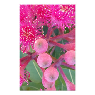 Attractive Australian Pink Gum Flower Design Stationery