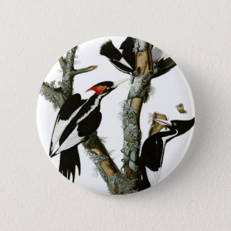 Aububon's Ivory-billed Woodpecker in Ash tree 2 Inch Round Button