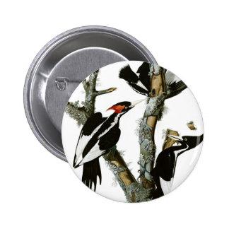 Aububon's Ivory-billed Woodpecker in Ash tree 2 Inch Round Button