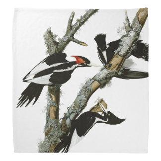 Aububon's Ivory-billed Woodpecker in Ash tree Kerchief