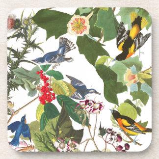 Audubon Birds Collage Wildlife Animals Coaster