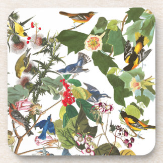 Audubon Birds Collage Wildlife Animals Coaster