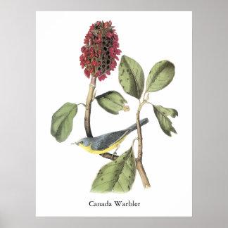 Audubon Canada Warbler Poster