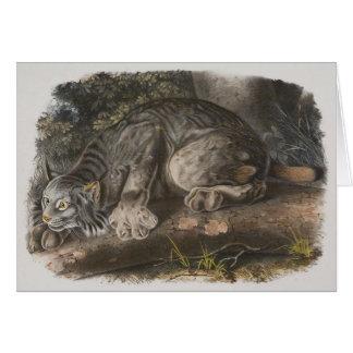 Audubon - Canadian Lynx Card