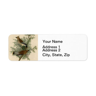Audubon Cedar Waxwing Bird