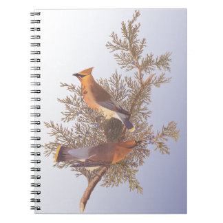 Audubon Cedar Waxwing Bird on Evergreen Juniper Notebook