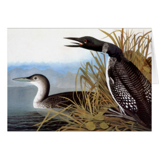 Audubon: Common Loon Card