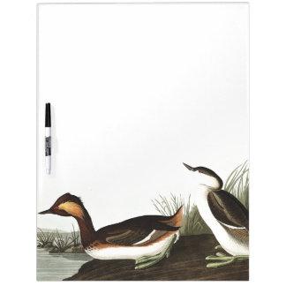 Audubon Eared Grebe Birds Wildlife Dry Erase Board