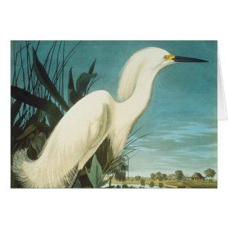 Audubon: Egret Note Card