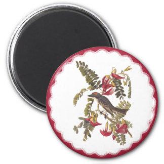 Audubon Gray Tyrant Bird Vintage Bookplate Art Magnet