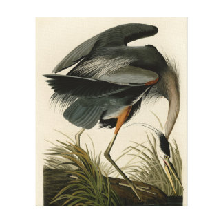 Audubon Great Blue Heron Birds Canvas Print