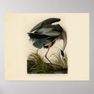 Audubon Great Blue Heron Birds Poster