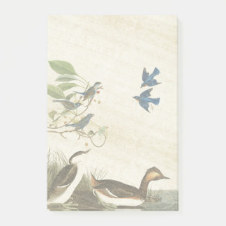Audubon Grebe Birds Wildlife Post It Notes