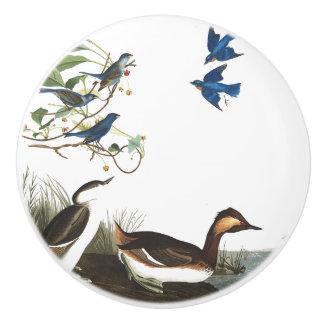Audubon Grebe Bluebird Birds Wildlife Animal Knob