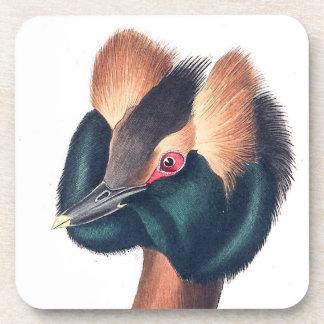 Audubon Horned Grebe Bird Wildlife Animal Coaster