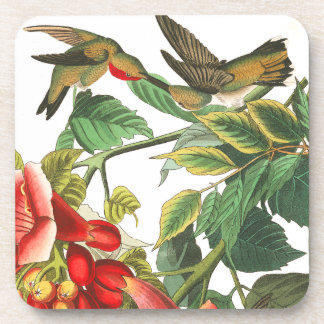 Audubon Hummingbird Birds Wildlife Floral Coaster