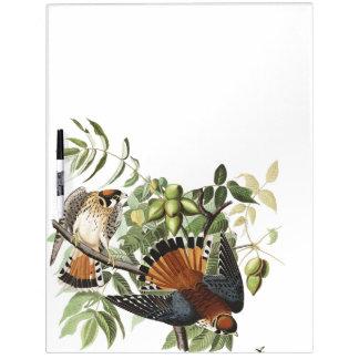 Audubon Kestral Birds Wildlife Dry Erase Board