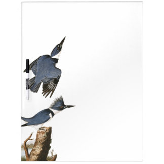Audubon Kingfisher Birds Wildlife Dry Erase Board