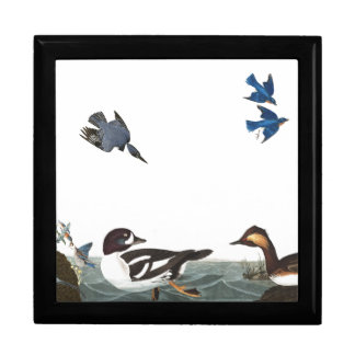 Audubon Kingfisher Bluebird Bird Wildlife Gift Box