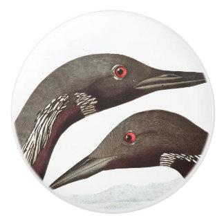 Audubon Loon Birds Wildlife Animal Knob