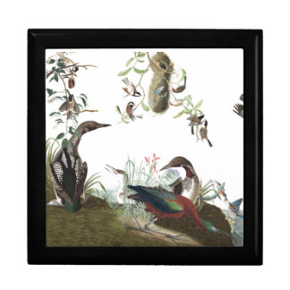 Audubon Loon Ibis Bluebird Bird Wildlife Gift Box