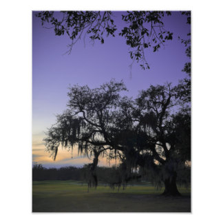 Audubon Park Sunset Photo Print