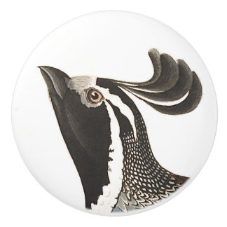 Audubon Partridge Bird Wildlife Animal Knob