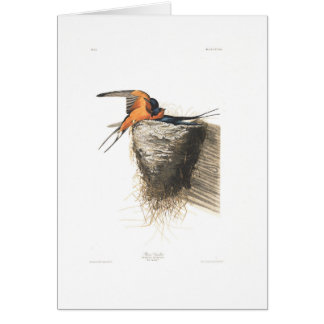Audubon Plate 173 Barn Swallow Card