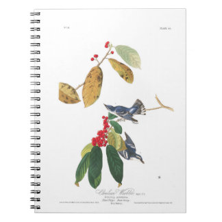Audubon Plate 48 Azure Cerulean Warbler Notebooks