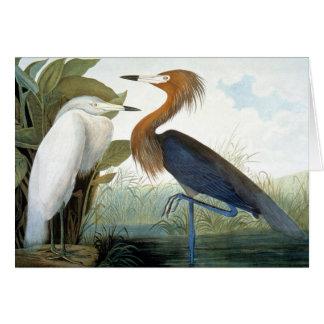 Audubon: Reddish Egret Or Purple Heron Note Card