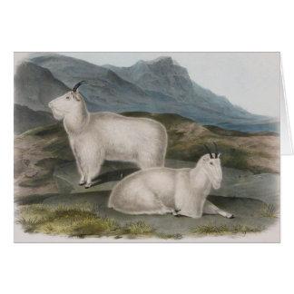 Audubon - Rocky Mountain Goat Card