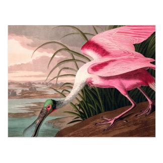 Audubon Roseate Spoonbill Bird Vintage Print Postcard