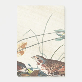 Audubon Sparrow Birds Wildlife Post It Notes