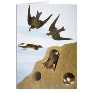 Audubon: Swallows Card