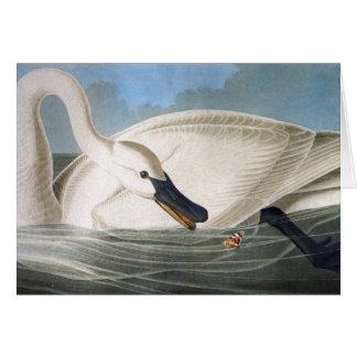 Audubon Swan Card