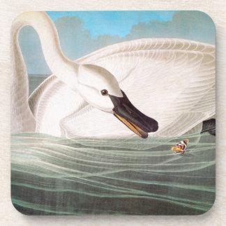 Audubon: Trumpeter Swan Drink Coaster
