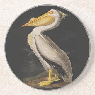 Audubon White Pelican Bird Vintage Print Coaster
