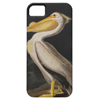 Audubon White Pelican Bird Vintage Print iPhone 5 Cover