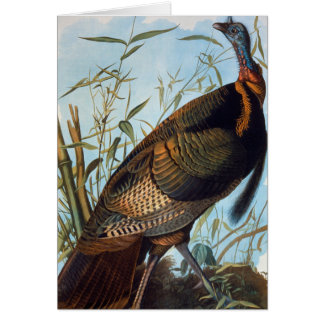 Audubon: Wild Turkey Card