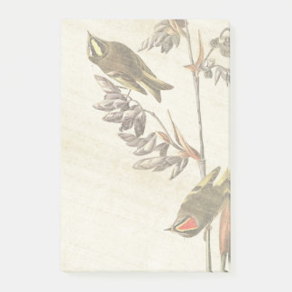 Audubon Wren Birds Wildlife Flowers Post It Notes
