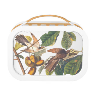 Audubon yellow billed cuckoo lunch box