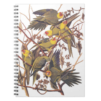 Audubon's Carolina Parakeet Spiral Notebook