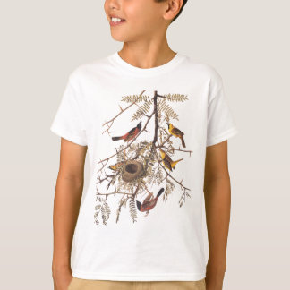 Audubon's Orchard Oriole Bird in Honey Locust Tree T-Shirt